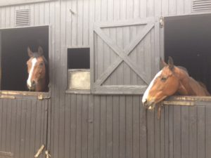 My horses Rocky & Poppy