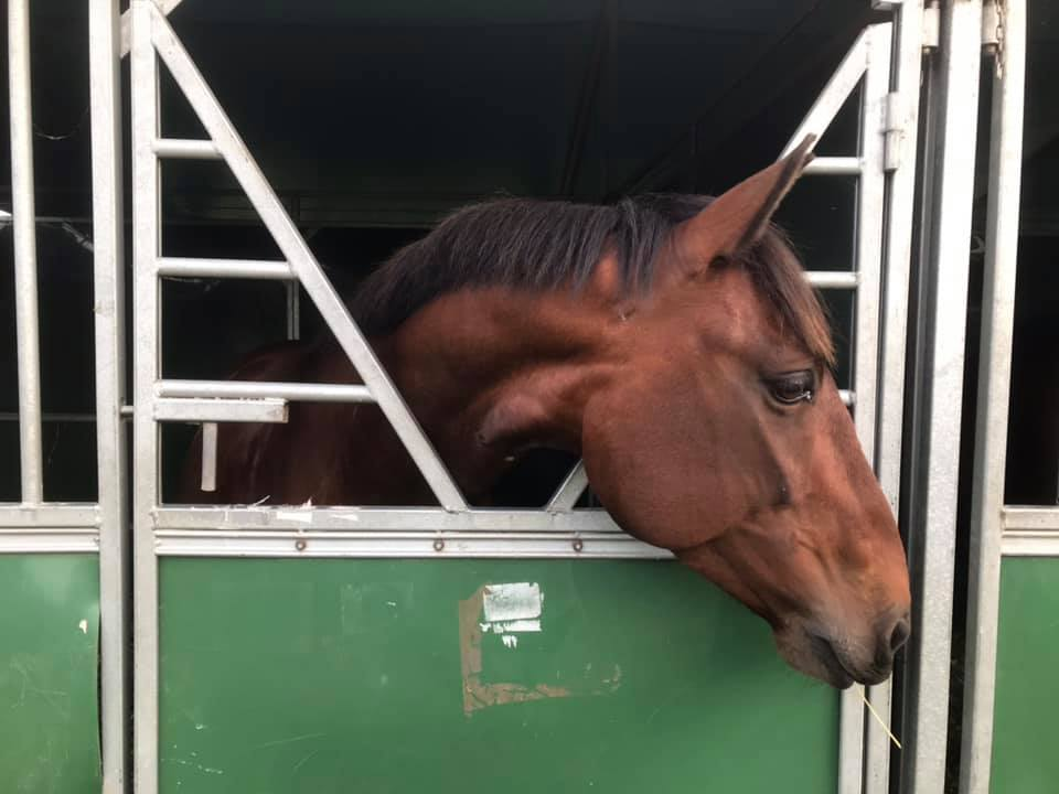 Pendle Brujo - Glamis Castle Horse Trials 03.08.2019
